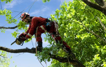 find trusted rated Kingston Upon Thames tree surgeons