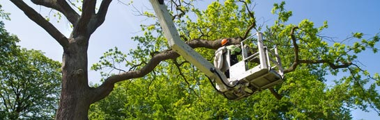 Kingston Upon Thames tree surgery services