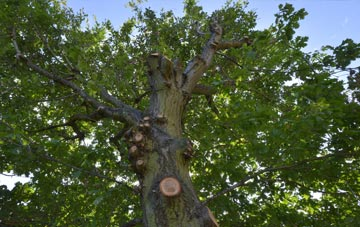 what is Kingston Upon Thames tree surgery?